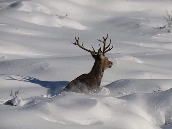 Uno de los animales afectados por la nieve. / ADECANA