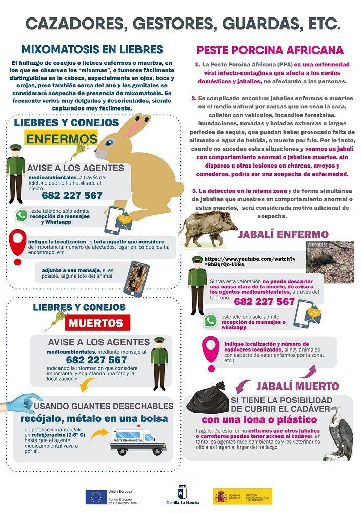 Esta útil infografía indica cómo actuar en caso de detectar mixomatosis en liebres o PPA en jabalíes