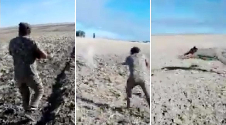 El tronchante vídeo del cazador que falla tres veces a una liebre y se lanza a por ella con las manos