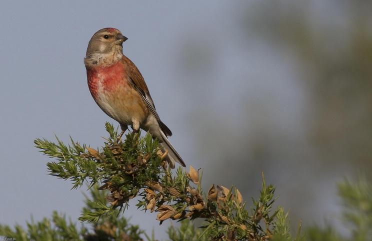 Los silvestristas condenan la captura ilegal de aves y el furtivismo