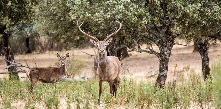 La-reserva-de-caza-de-Cijara-recibe-la-etiqueta-de-calidad-Wildlife-Estates
