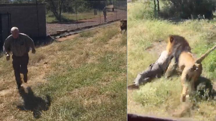 Este terrorífico vídeo de un león atacando y arrastrando a un hombre se vuelve viral