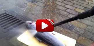 Limpia pescado con una hidrolimpiadora