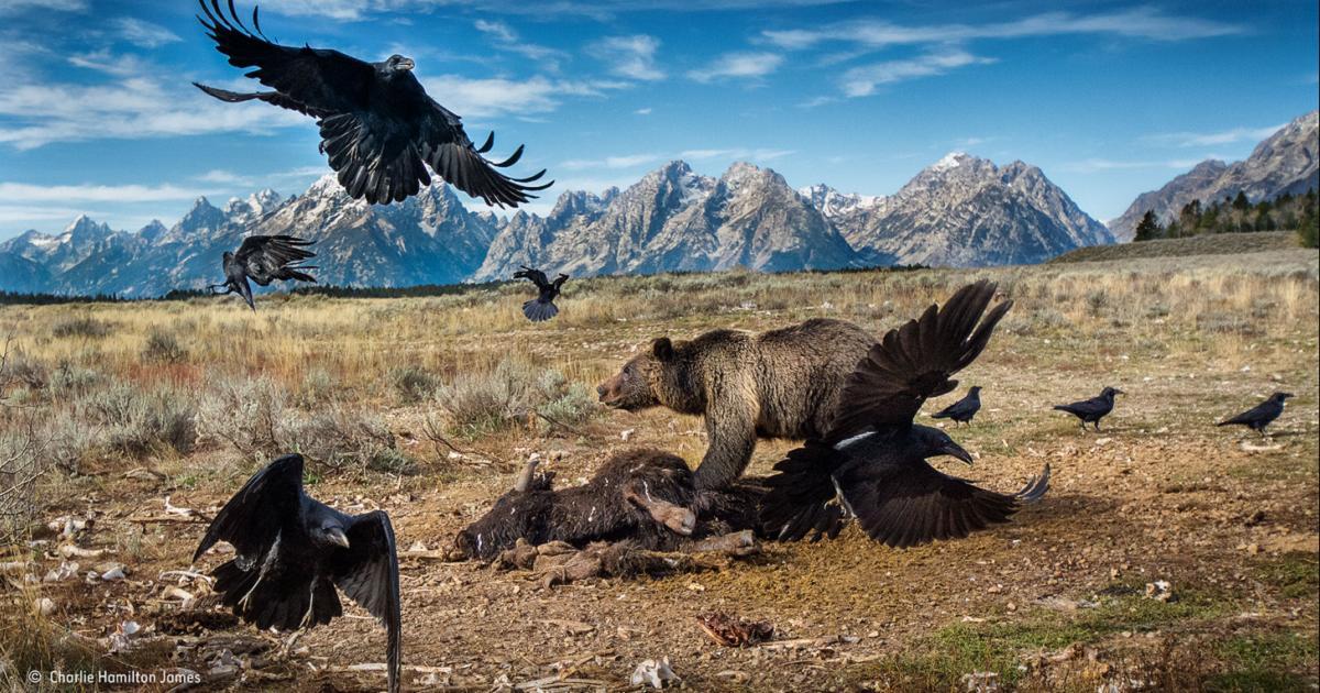 Los fotógrafos españoles arrasan en el mayor concurso de fotografía de naturaleza