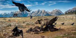 los-fotografos-espanoles-arrasan-en-el-mayor-concurso-de-fotografia-de-naturaleza