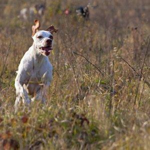 Los perros se utilizan para cazar desde hace más de 11.500 años