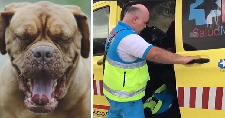 Dos perros matan a una madre y a su hija en Madrid