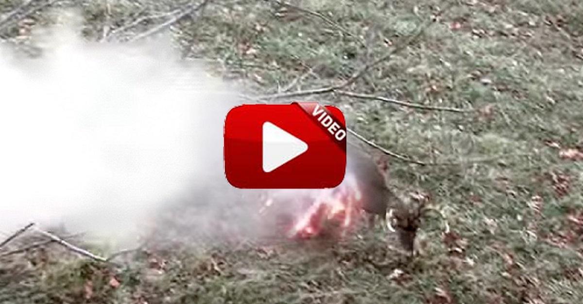 Dispara a un ciervo y… ¡la munición se comporta como fuegos artificiales!