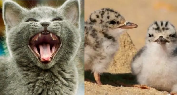 Un gato mata 40 polluelos de un ave protegida en un santuario de animales