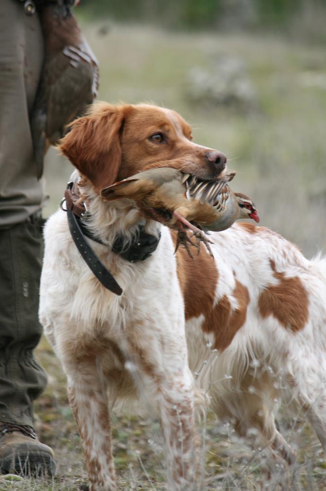 ¿Están bien cuidados los perros de caza?
