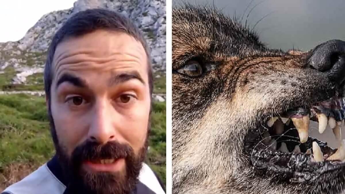 Nel Cañedo estalla por los ataques del lobo: «Este año nos van a comer vivos»