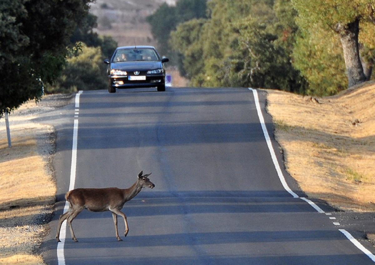 FEDEXCAZA elabora un informe que alerta del peligro para la seguridad vial de no cazar