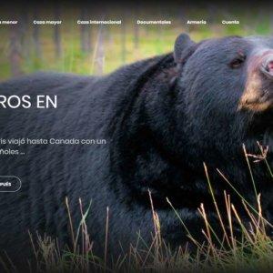 Oso negro de Canadá: caza internacional única y salvaje en América