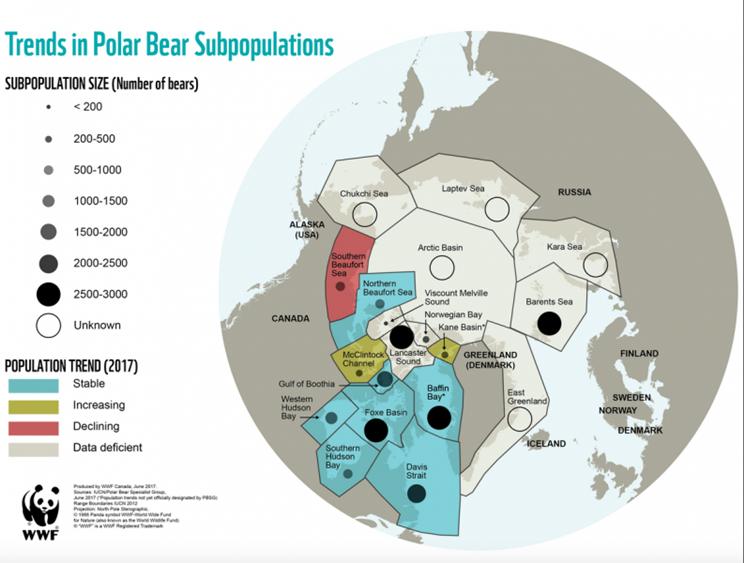 Población de osos polares según la WWF / Fotografía: WWF