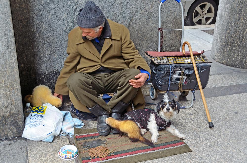 Galicia multará con hasta 5.000 euros a quien recorte las orejas o el rabo a los perros
