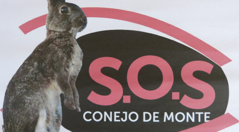 La Dirección General de Conservación de la Naturaleza recoge las inquietudes de 'SOS Conejo de Monte'