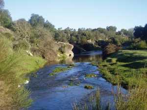 Río y vegetación