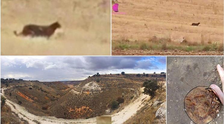 La presunta pantera sigue creando controversia en Guadalajara