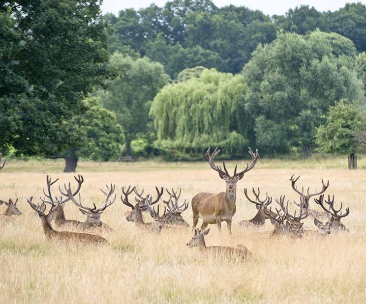 Los españoles pagarán 320 millones de euros si se prohíbe cazar en los Parques Nacionales