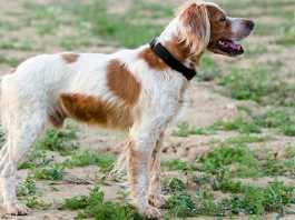 Perro extraviado durante una cacería / Fotografía: JyS