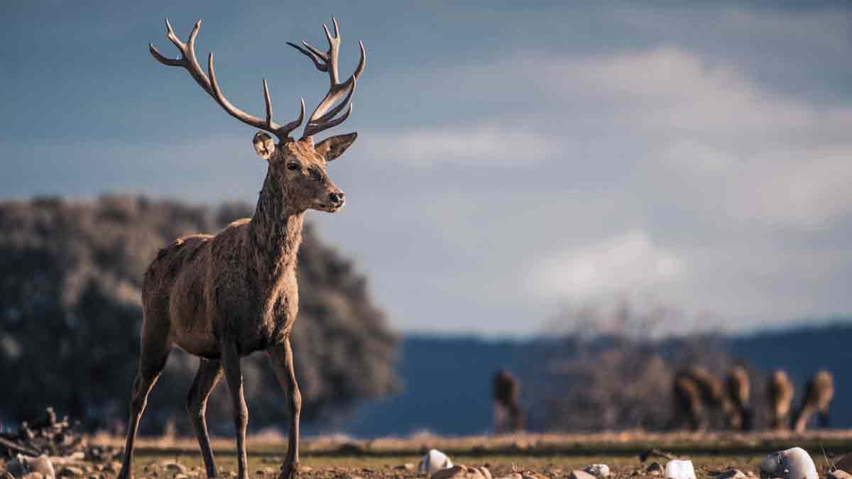 La caza en parques nacionales queda prohibida desde hoy: ¿Qué va a pasar ahora?