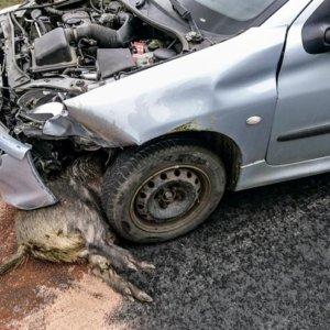 Esto es lo que pasaría si se llegara a prohibir la caza en España