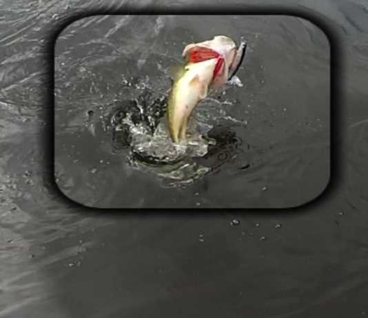 Pesca del black bass en primavera