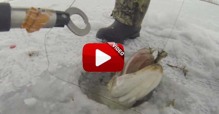 Así es la primera captura bajo el hielo de un afortunado