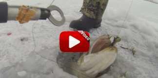 Primera captura bajo el hielo.