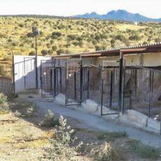 Los cazadores sentarán en el banquillo a los responsables de la muerte de 25 perros en Badajoz