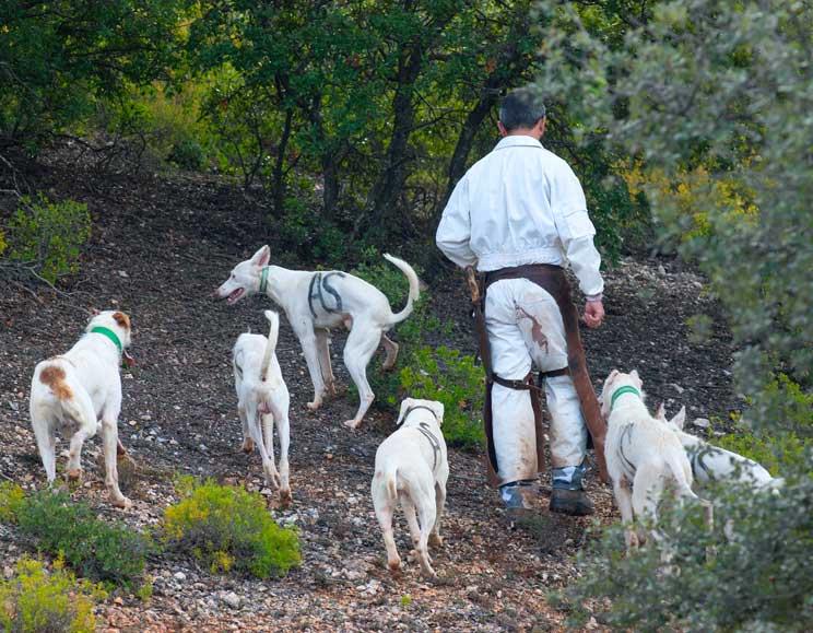 Mutuasport lanza un seguro que cubre a las rehalas, a sus propietarios y a los perreros