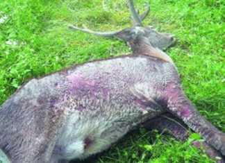 Caso de sarna en ciervos / Fotografía: larioja.com