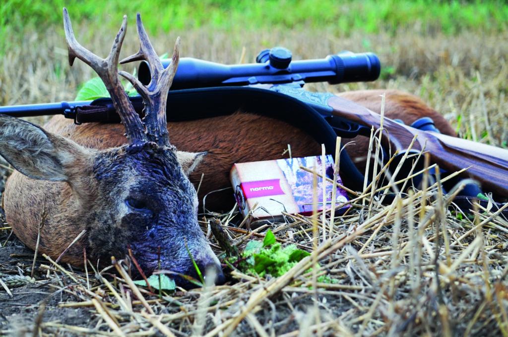balas de caza