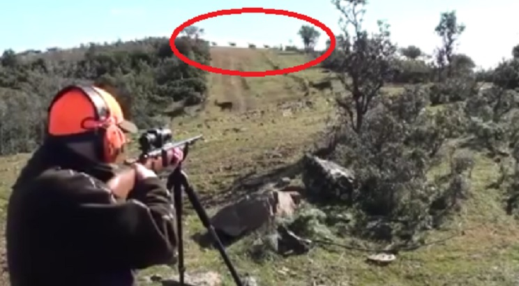 cazador ciervos
