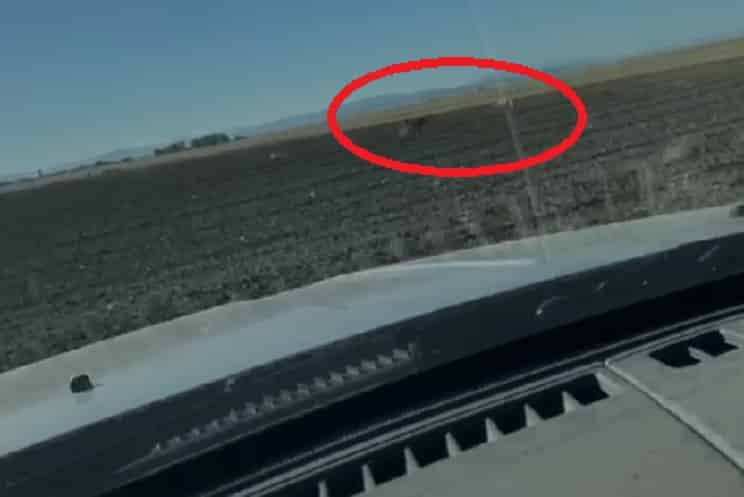 Se graban 'furtiveando' liebres y el vídeo llega a las redes sociales indignando a los cazadores