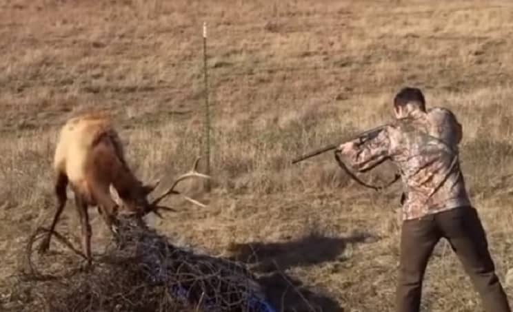 Un cazador dispara a un ciervo atrapado (y no es como imaginas)