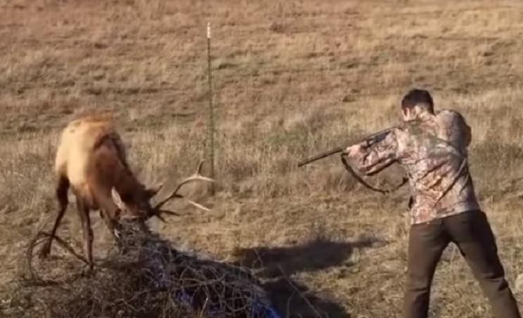 ciervo cazador