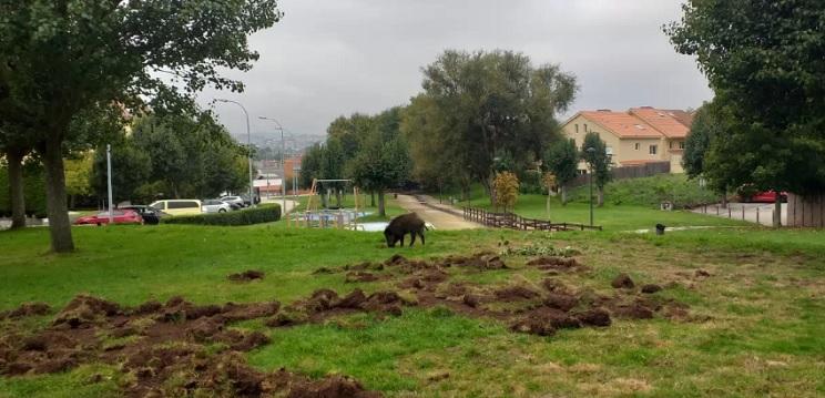 jabalí parque