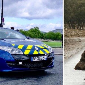 Un Megane RS de la Policía francesa se estrella contra un jabalí durante una persecución