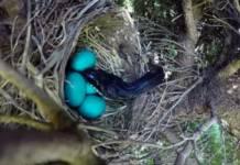 serpiente huevos