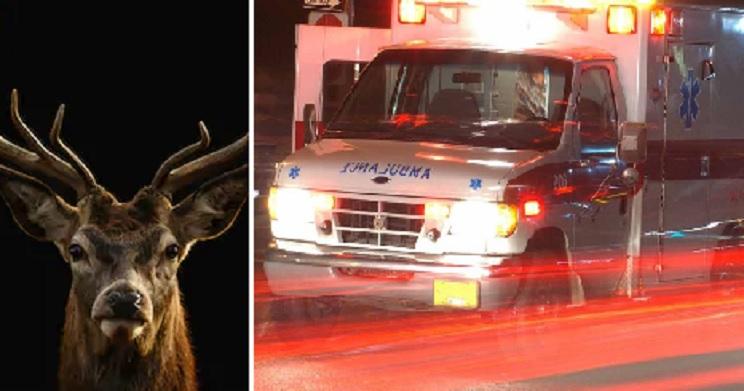 Un ciervo herido mata a cornadas al cazador que acababa de dispararle