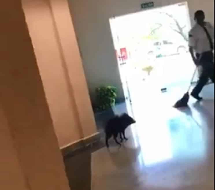Un jabalí se cuela en una facultad de enfermería