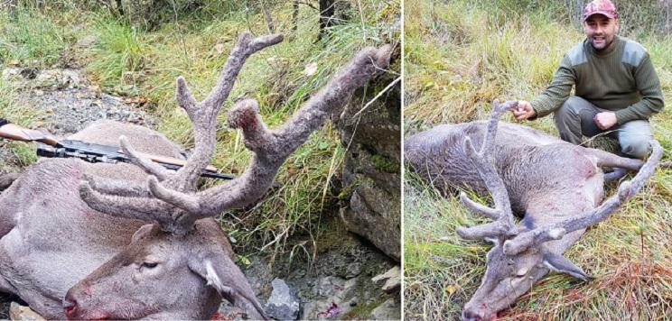 Caza un ciervo con su cuerna cubierta de borra en pleno mes de noviembre