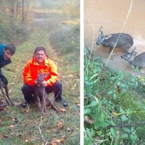 Dos cazadores de perdices salvan a dos corzos que estaban a punto de morir en un canal