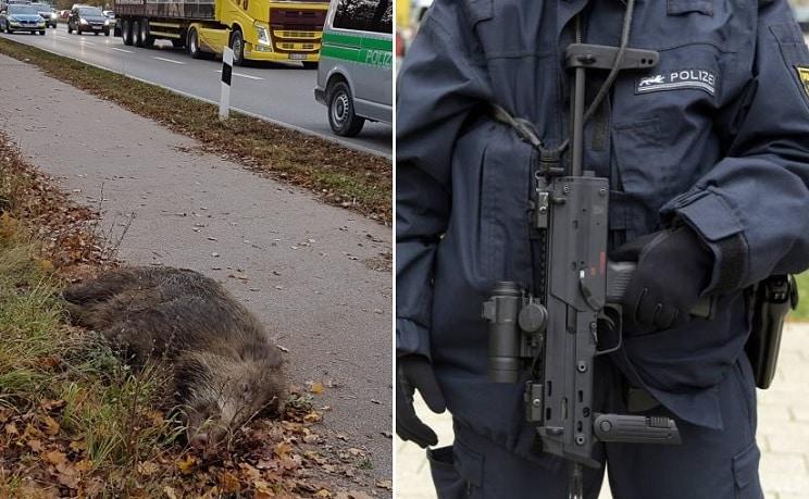 Un policía abate a un jabalí disparando desde el techo del coche patrulla en Alemania