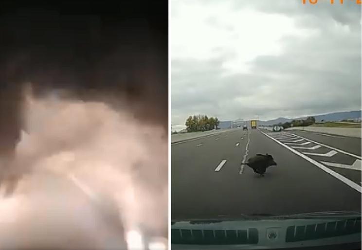 Dos situaciones que muchos conductores evitan gracias a los cazadores (y no lo saben)