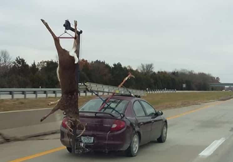 Cuelga un ciervo de su coche con un raro dispositivo y conduce con él por una autovía