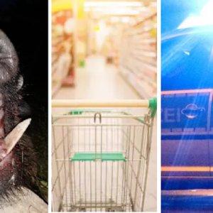Un jabalí se cuela en un supermercado y provoca 15.000 euros de daños