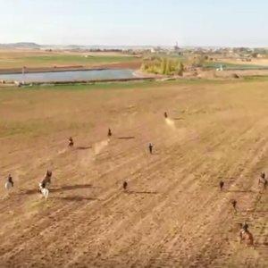 Impresionantes imágenes de carreras de galgos grabadas con un dron