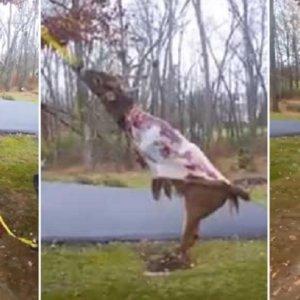Este truco para quitar la piel de un ciervo en segundos triunfa en las redes